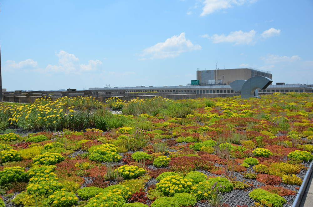 Department of the Interior Green Roof