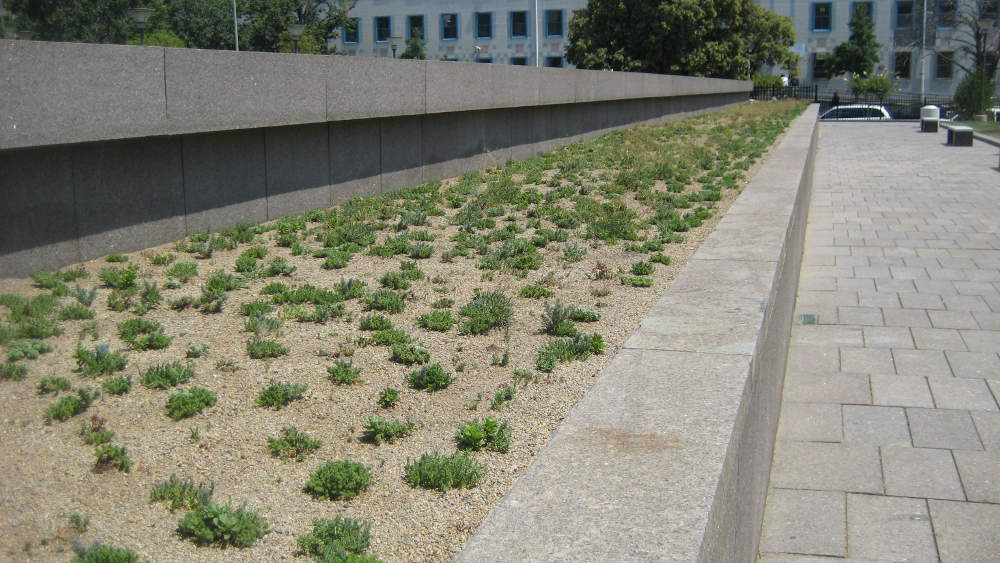 U.S. Tax Court Green Roof Before